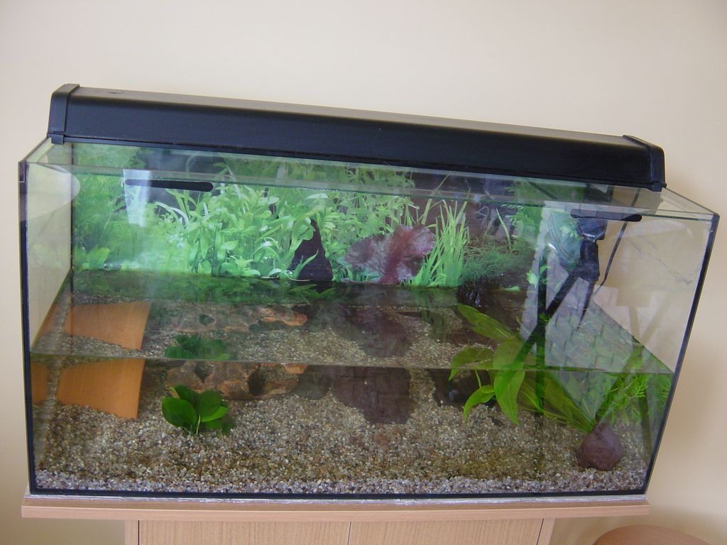 monomaniac fr 187 aquarium transform 233 en orchidarium