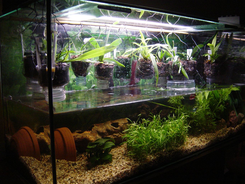 Aquarium plastique for Modele bac a poisson