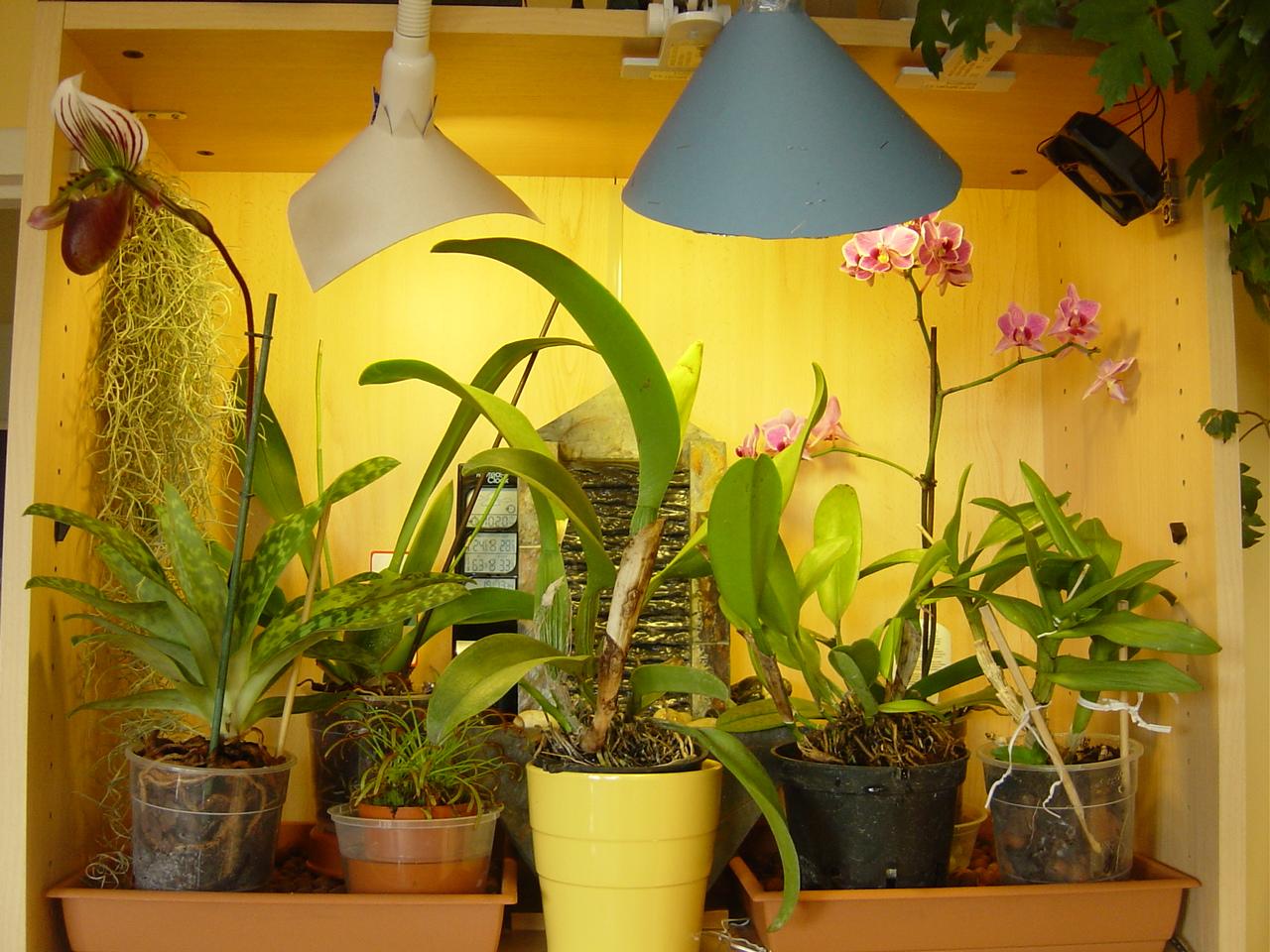 monomaniac fr mes autres orchid es. Black Bedroom Furniture Sets. Home Design Ideas