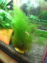 Stringy Moss