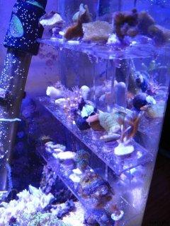 Support pour boutures coraux
