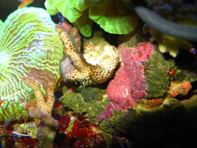 Nudibranches_111101_02_r