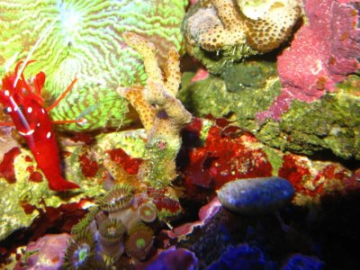 Nudibranches_111101_03_r
